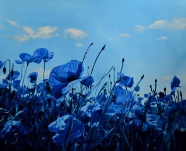 Corn poppies in blue/Pavots de maïs en bleu