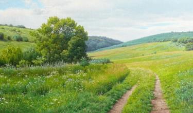 Meadow / Prairie